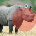 Lives of Endangered Rhinos to be saved with GPS and Real-Time Data Tracking