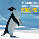 Tiny Tracker helps Scientists Track Loads of Location Information About Penguins