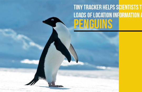 <img src='http://www.trackschoolbus.com/wp-content/uploads/2017/02/21-02-2017-Tiny-Tracker-helps-Scientists-Track-Loads-of-Location-Information-About-Penguins-540x350.jpg' title='Tiny Tracker helps Scientists Track Loads of Location Information About Penguins' alt='' />